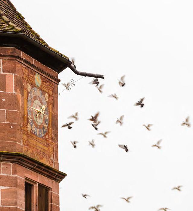 Glockenturm im Kloster Hirsau